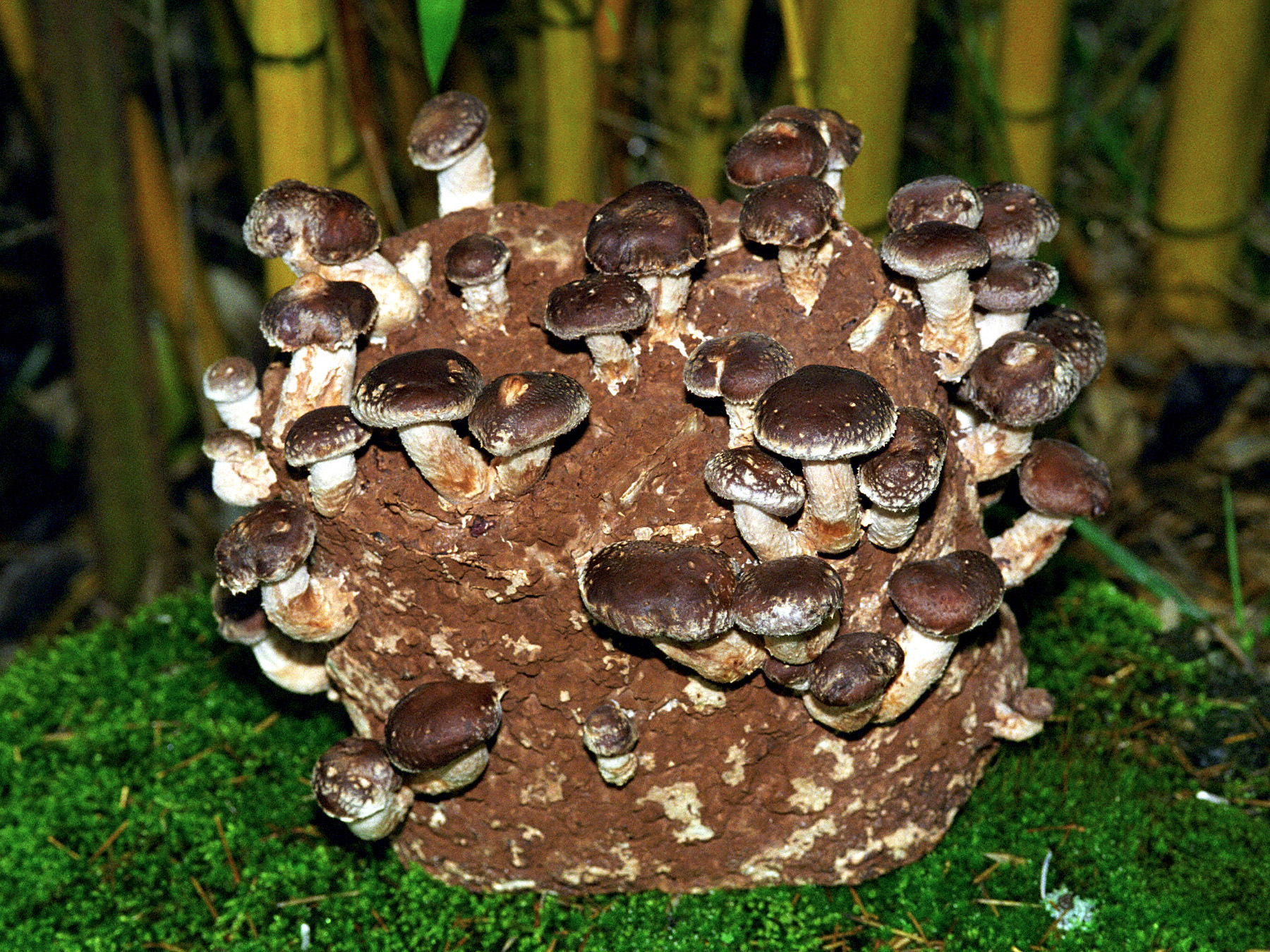 Shiitake-Kit-3