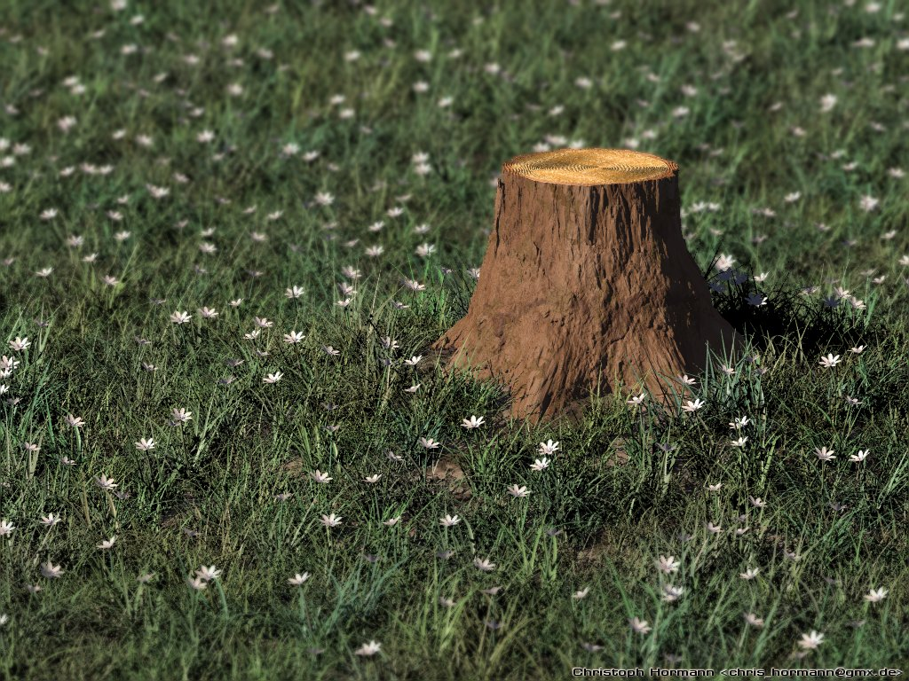 Stump mushrooms montana