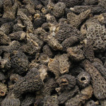 Dried Morels (Duplicate)