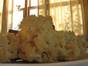 Conifer Coral