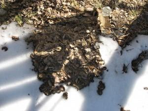 Oyster Mushroom Bed