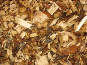 Mushroom Bed Closeup
