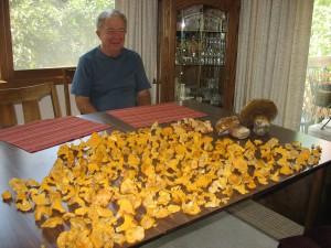 Batch of Mushrooms
