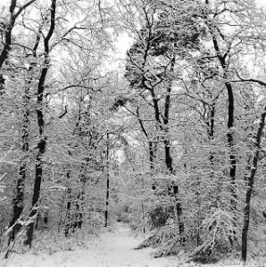 alp_winter_trees