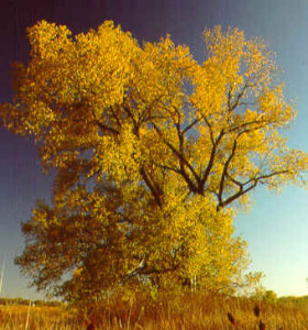 cwdtree